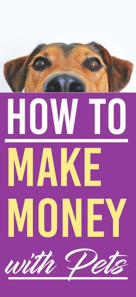 If you love pets you can turn that love into some extra money. Here are some easy ways to make money with your (or other people's) pets | Making Money | Pets |Side Hustle | Extra jobs | #makingmoney #earnmoney