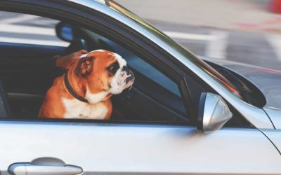 Is Pay Per Mile Car Insurance Right For You?