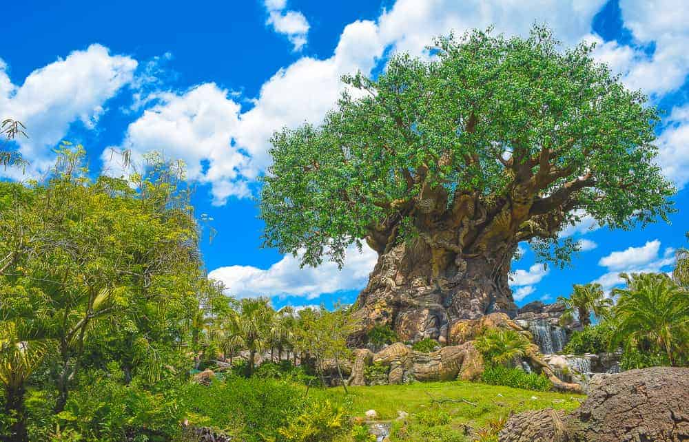 Top 7 Fast Pass Rides in Animal Kingdom