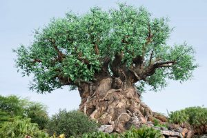 Animal Kingdom FastPass