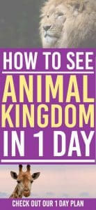 Animal Kingdom is an amazing place in the Walt Disney World. Here is a 1 day plan for you to see the best of what this park has to offer | Disney World | Animal Kingdom |